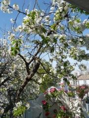 primavera-2piso